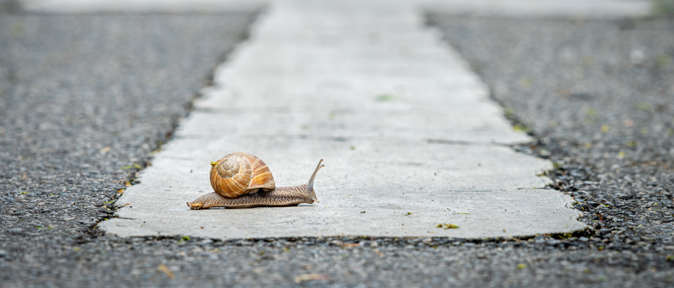 A snail stopped in the middle of the road