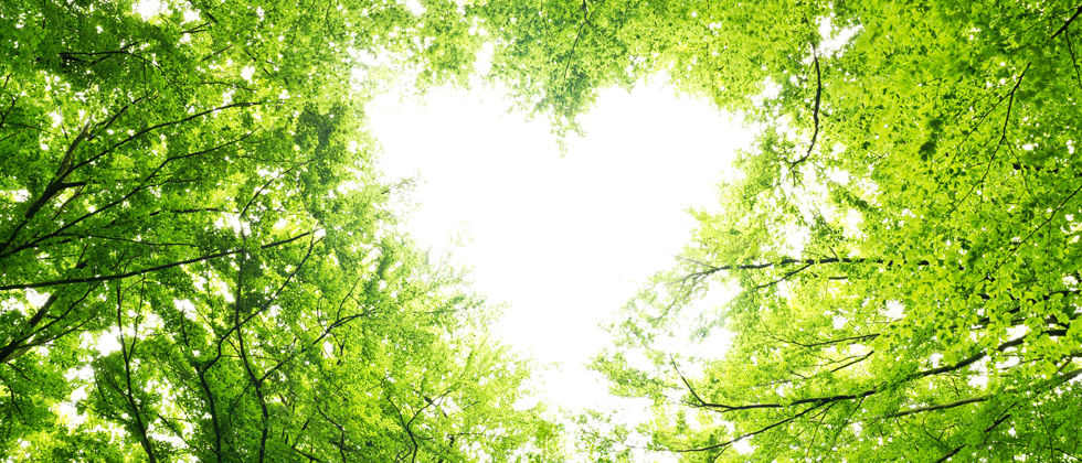 A heart shape formed in the sky by tree branches and leaves