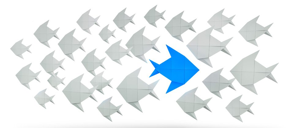 A school of grey fish with one big blue fish in the middle